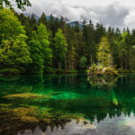 View of a tree on a small lake island in one of the best hikes in Bavaria